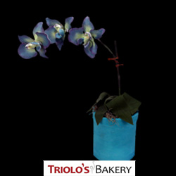 Blue Orchid Cake >Floral Arrangement Series > Triolo's Bakery Bedford, NH, USA