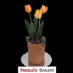 Tulips in Cyclindrical Base - Edible Centerpiece Collection