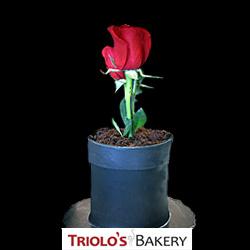 Fresh Roses - Edible Centerpiece Collection